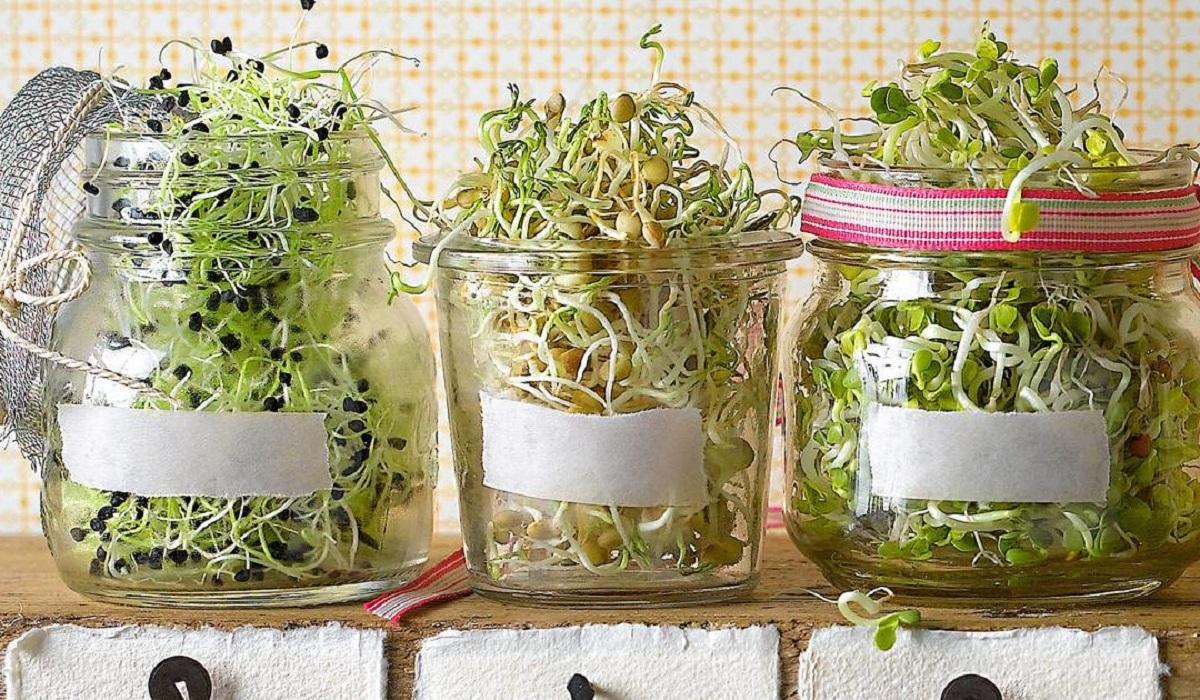 Germinados en casa: Cómo hacer un huertito en tu cocina